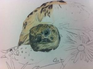 The tortoise has no hair